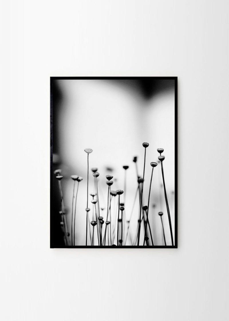 Kristian Holm - Flowers