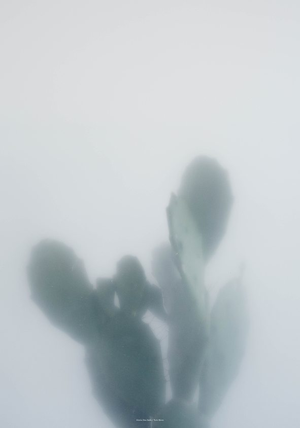 Kristina Dam - Cactus I