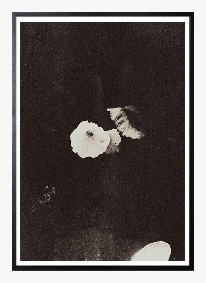 Chieska Smith - Nightflower