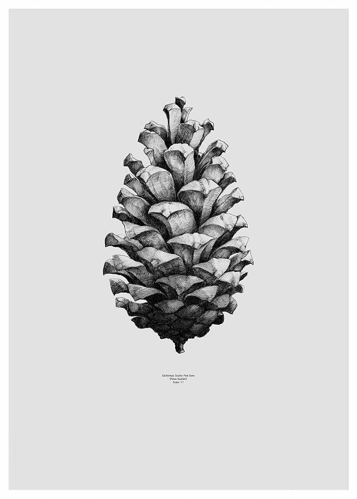 paper collective pine cone poster the poster club. Black Bedroom Furniture Sets. Home Design Ideas