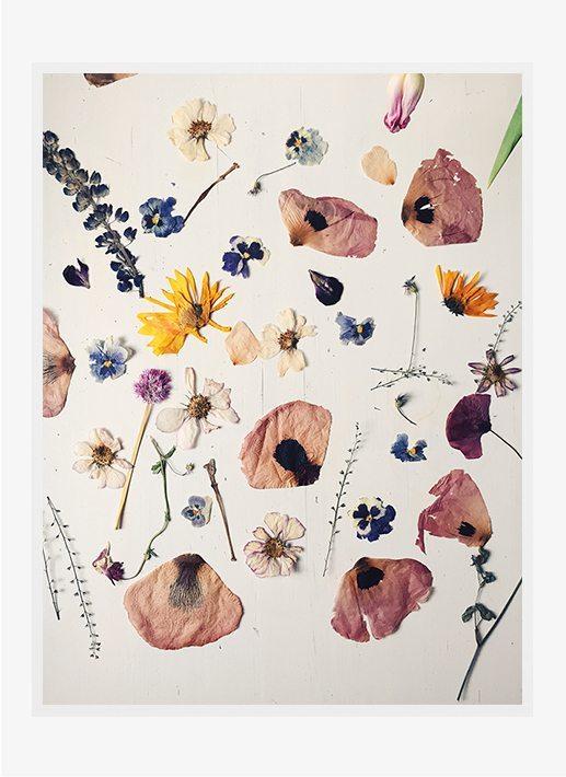 Ida Lærke - Multi flower II