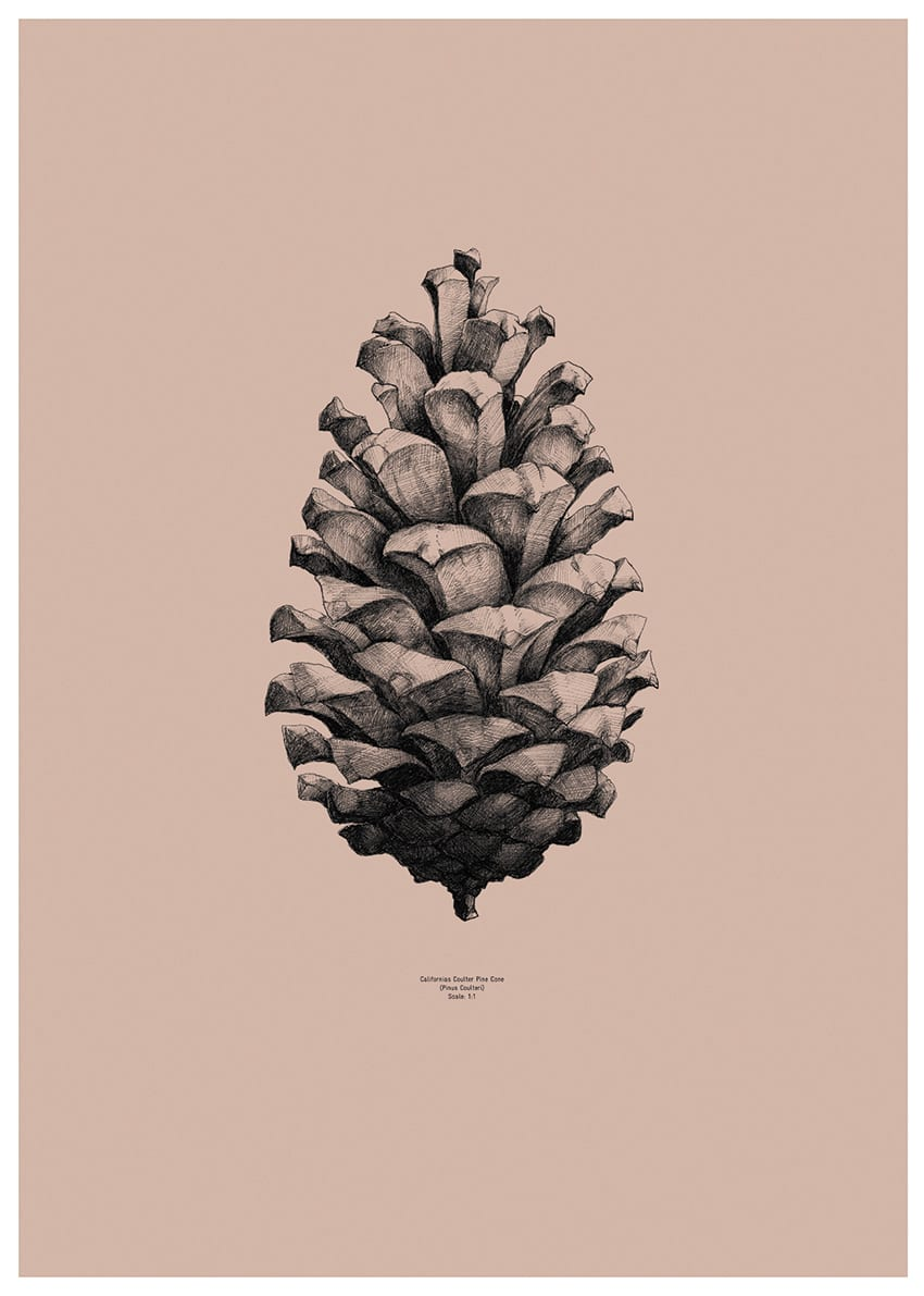 Form us with love, Pine cone Comodo Pink