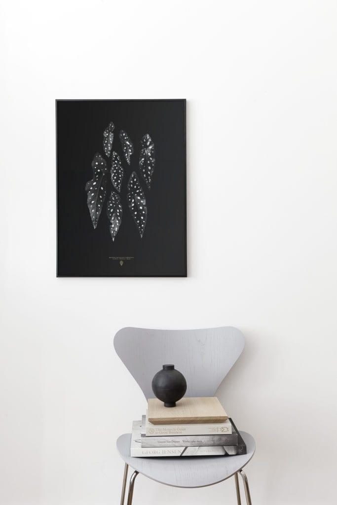 Begonia Maculata | Via theposterclub.com